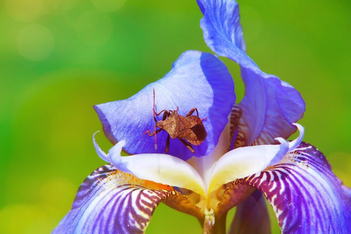 close-up photo of an insect crawling on a flower