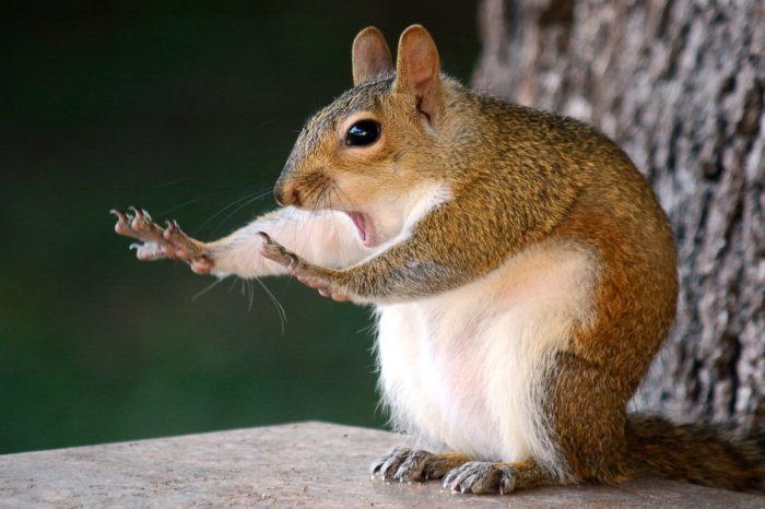 A cute photo of a squirrel