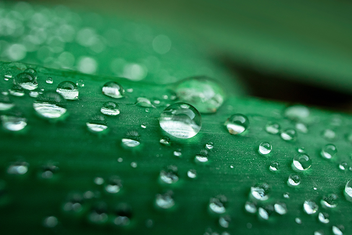 Macro photography of water drops on a leaf.