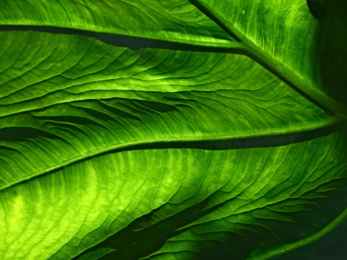 Macro photo of a green leaf