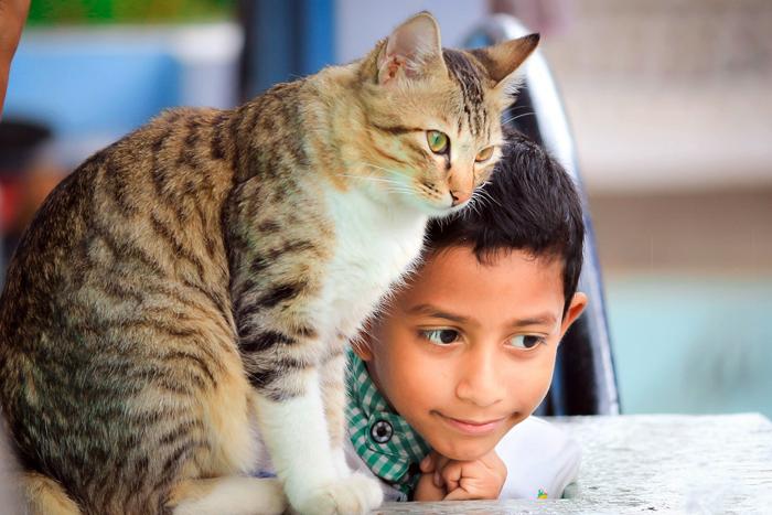 Gato malhado ao lado de um menino
