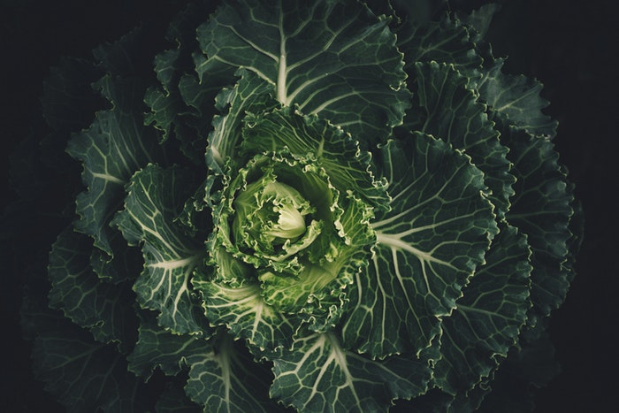 Moody photo of the centre of a cabbage