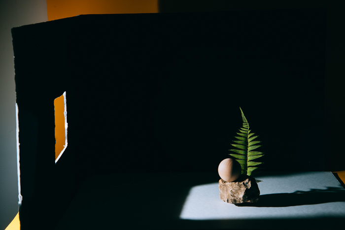 photo of a still life composition of a small rock and a leaf with black cardboard behind