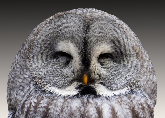 close-up photo of an owl with closed eyes