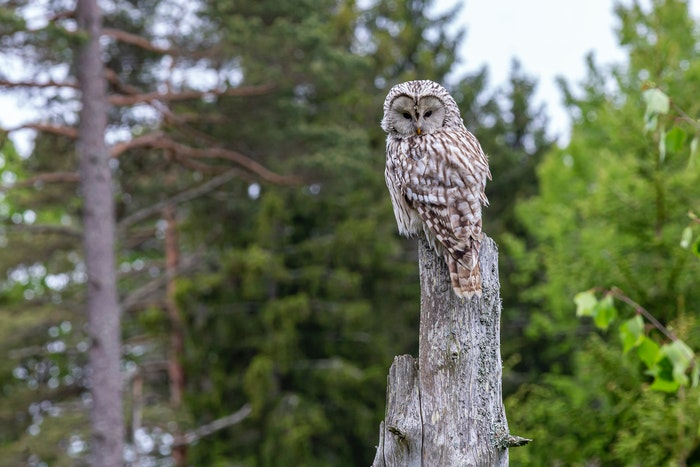 photo of an owl sitting on a tree trunk