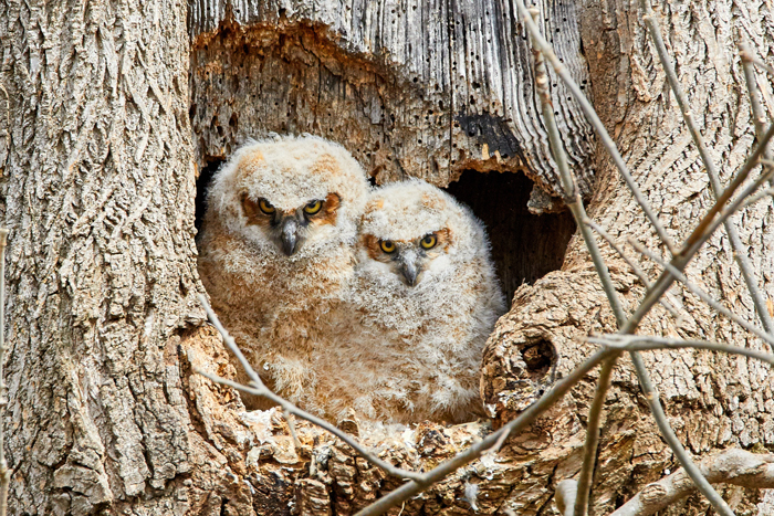 photo of baby owls in their nest