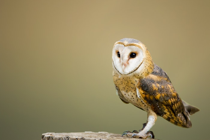 photo of an owl on a tree trunk