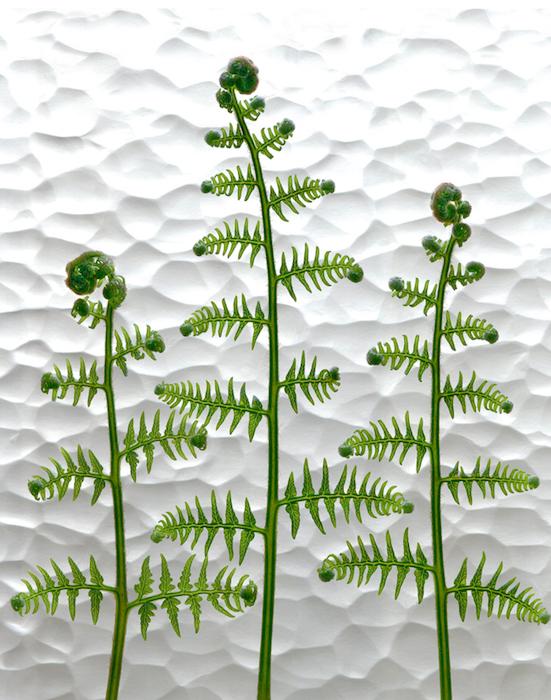 Scanography using ferns