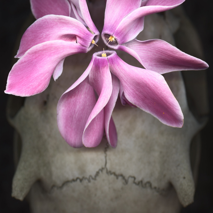 Scanography with flowers and skull