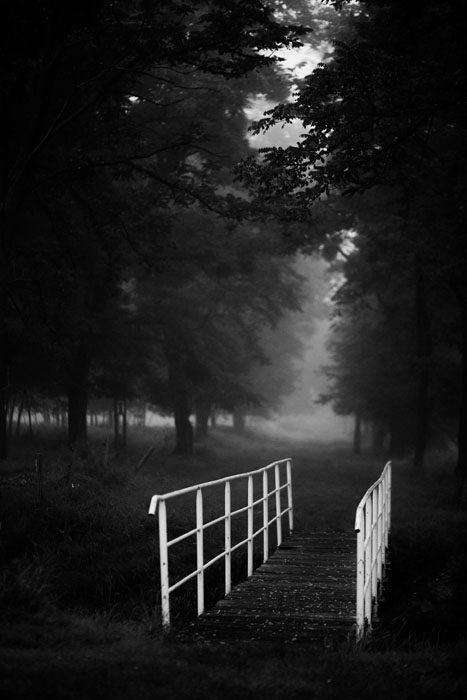 black and white photo of a forest