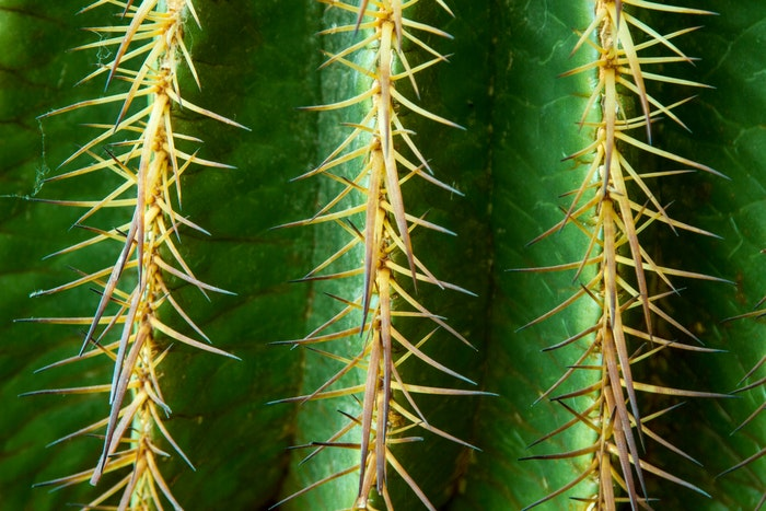 A sharp image of a cactus detail