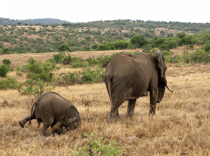 Foto engraçada de um animal elefante do Comedy Wildlife Photography Awards