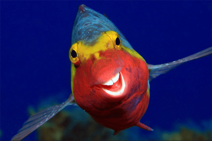Funny photo of a smiling fish from the Comedy Wildlife Photography Awards