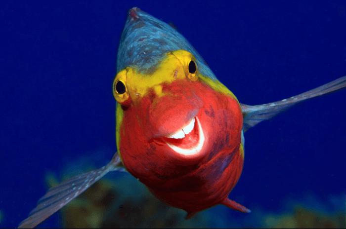 Foto engraçada de um peixe sorridente do Comedy Wildlife Photography Awards