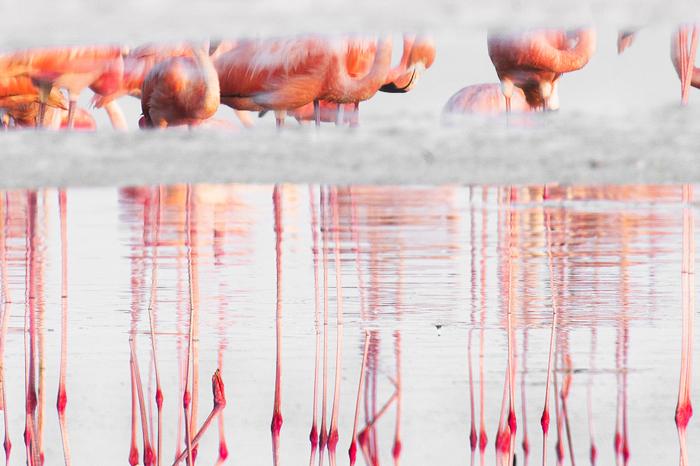 Um grupo de flamingos refletido em um lago