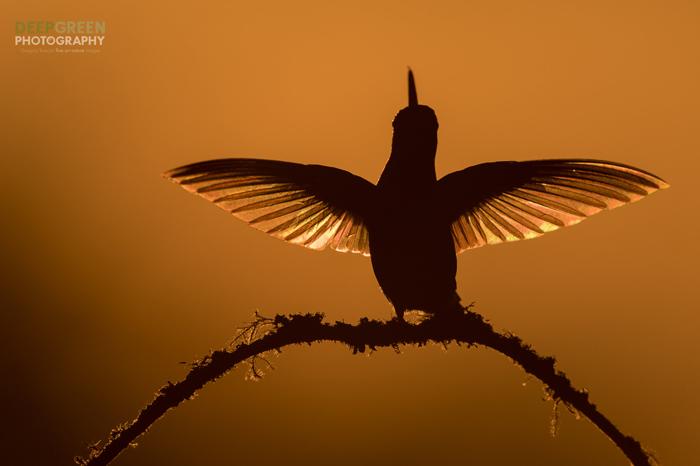 Foto da silhueta de pássaro