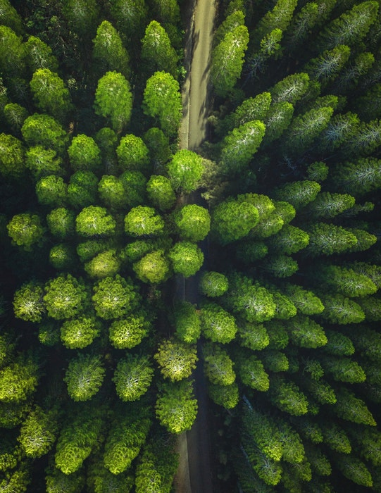 Forest scene shot from a birds eye view perspective