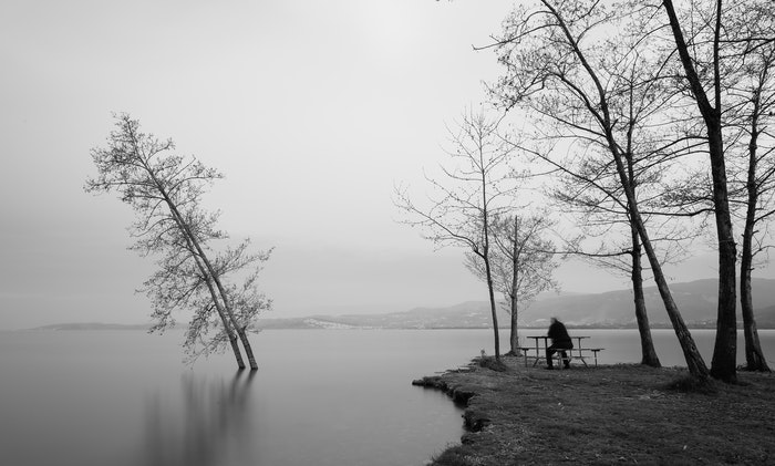 Uma cena em preto e branco de paisagem de árvores em um lago