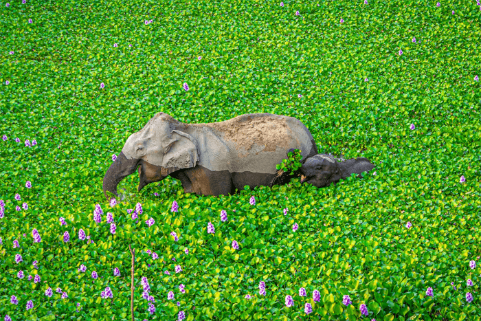 Funny photo of a mother and baby elephant from the Comedy Wildlife Photography Awards