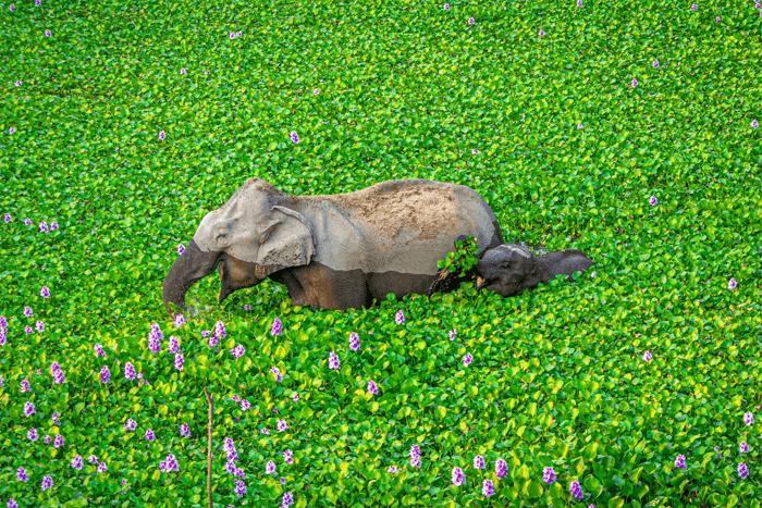Foto engraçada de uma mãe e um bebê elefante do Comedy Wildlife Photography Awards