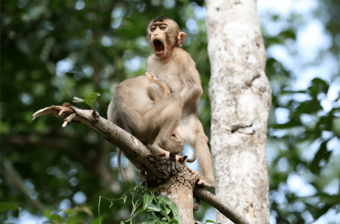 Funny photo of monkeys from the Comedy Wildlife Photography Awards