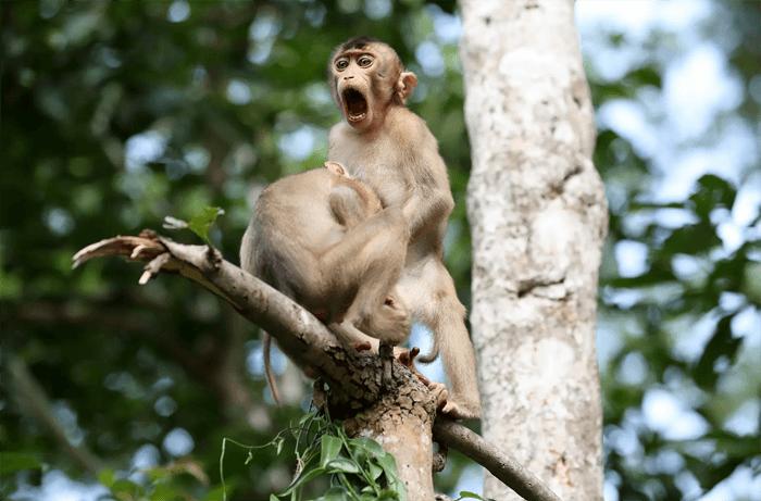 Foto engraçada de macacos do Comedy Wildlife Photography Awards