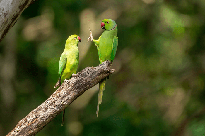 Funny photo of a chatting parakeets from the Comedy Wildlife Photography Awards