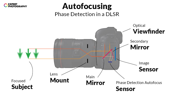 infographic about autofocusing in a DSLR