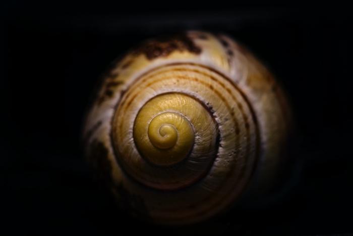 closeup radial balance photo of a snail shell