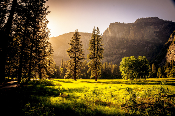 Photo of a forest during sunset, with mountains in the background
