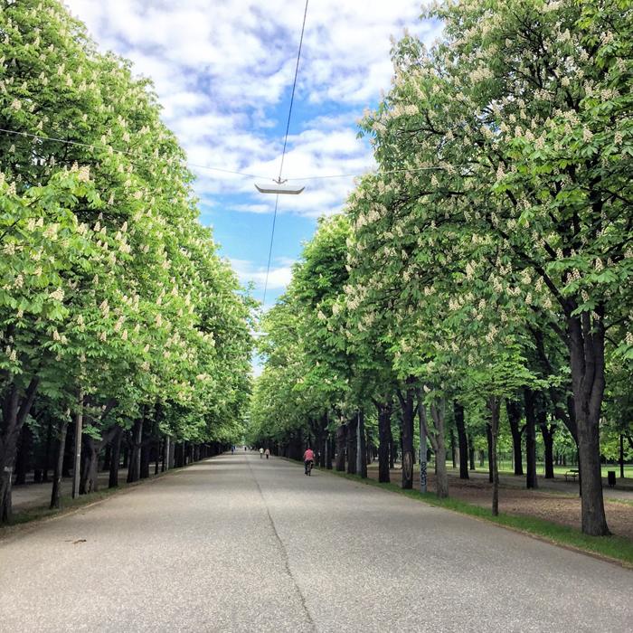 Um caminho arborizado.