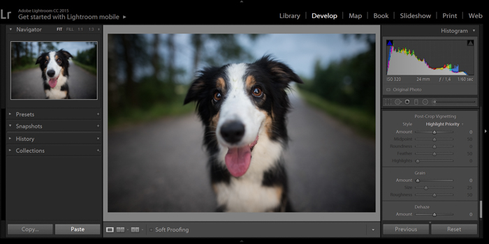 screenshot of editing a dog portrait in Lightroom