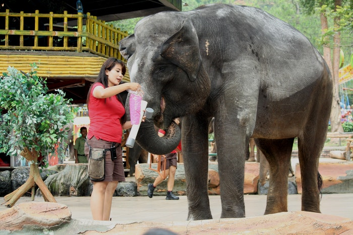 photo of a caretaker feeding an elephant at the zoo