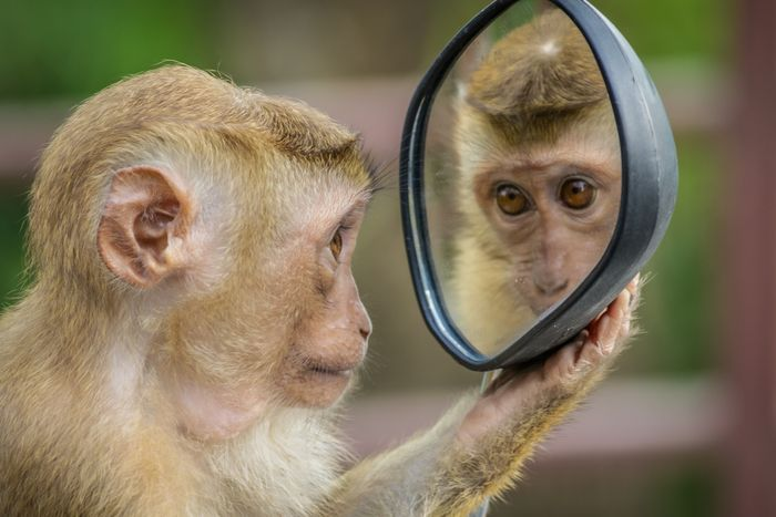 photo of a monkey holding a mirror