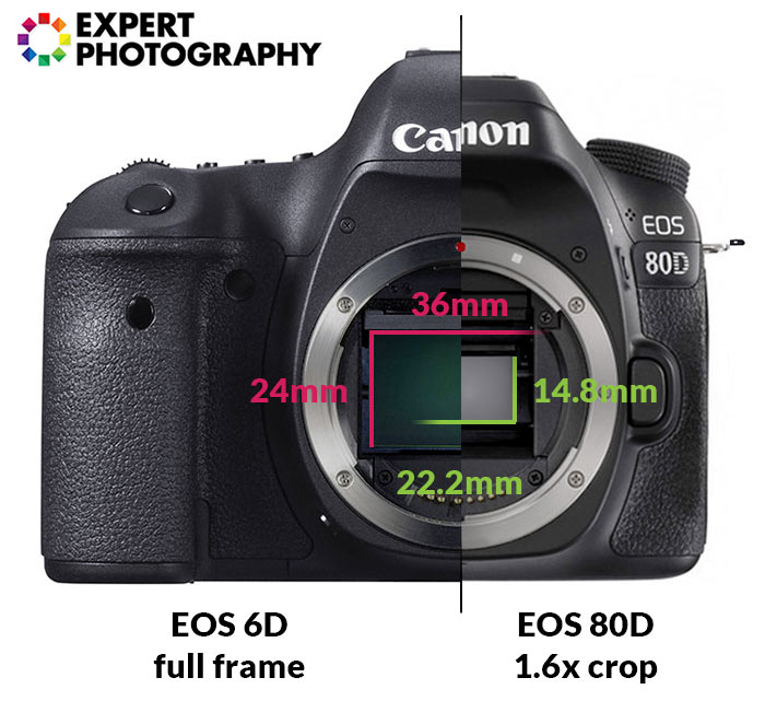 A canon camera with definitions of photography terms overlayed