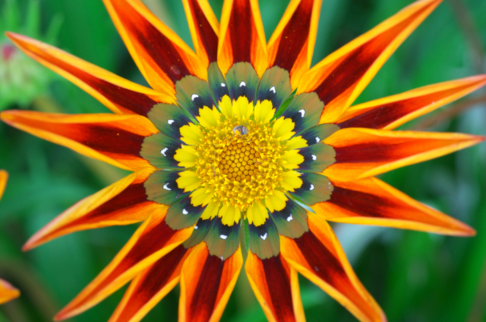 Macro photography of the center of a colorful flower.