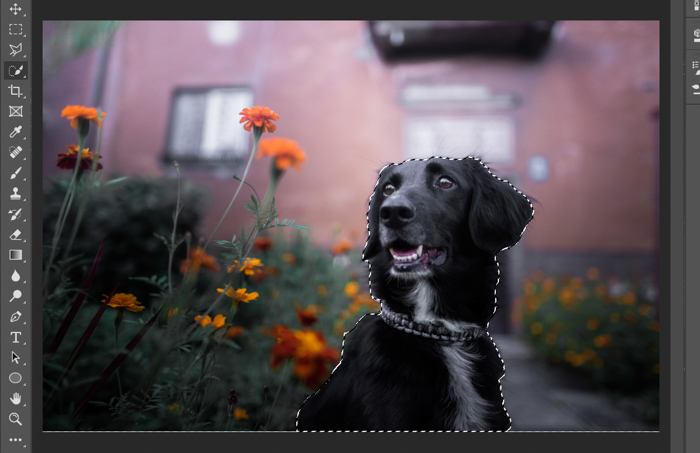 Screenshot of using the quick selection tool in Photoshop