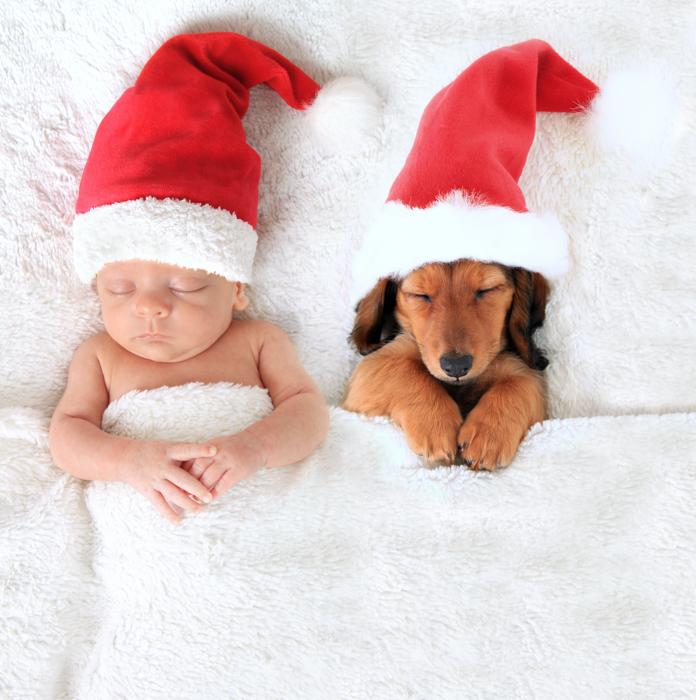 Foto de Natal de um bebê fofo de um recém-nascido e um cachorro com chapéus de Papai Noel na cama