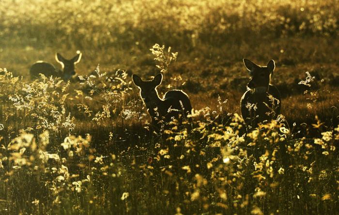 foto de três filhotes de veado em um campo