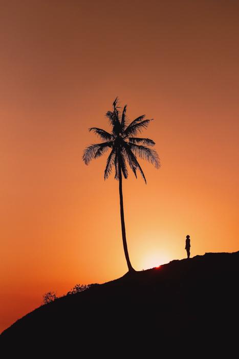 Uma imagem da silhueta de um homem olhando para uma palmeira iluminada pelo sol poente