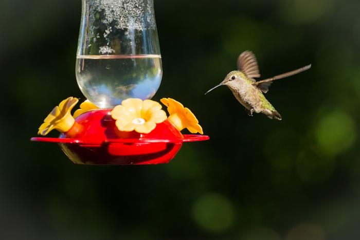 uma foto de um colibri voando em direção a um comedouro de pássaros