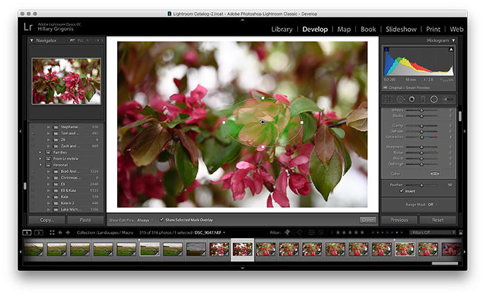 A screenshot of editing in Lightroom