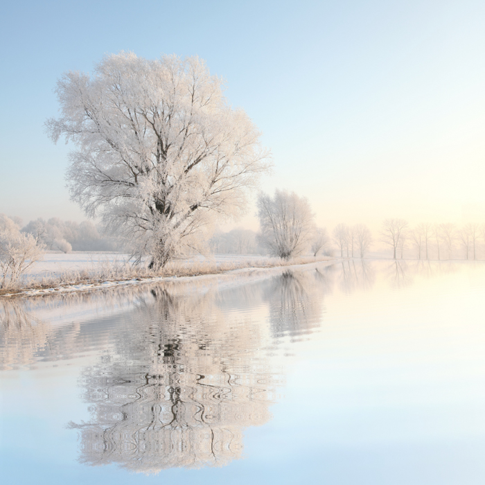 Dreamy winter photography of snowy trees by a lake