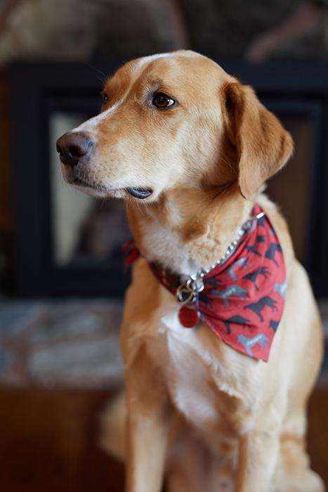 Um cachorro fofo fotografado com lentes artísticas Sigma 50mm f 1.4 dg hsm f / 2