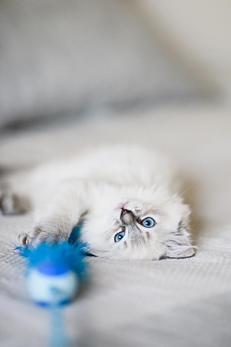 Um gato fotografado com uma lente Sigma 85 mm em uma profundidade de campo rasa