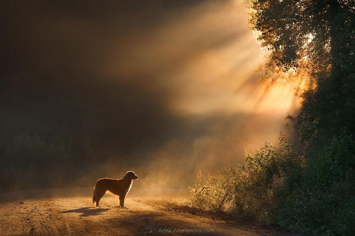Fotografia do animal de estimação de um cachorro ao ar livre