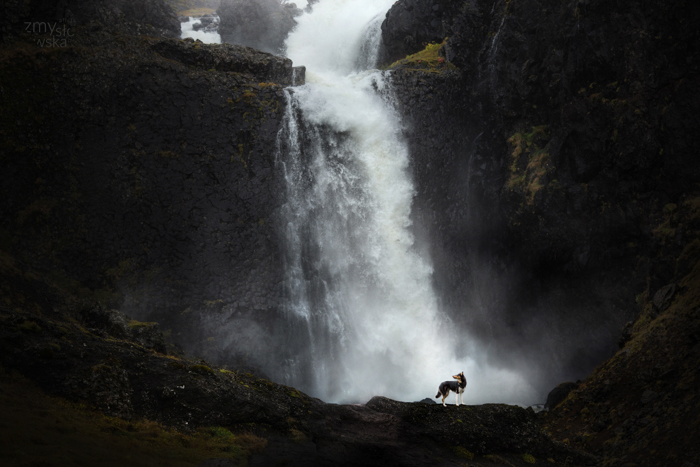 A dog posing in front of a waterfall