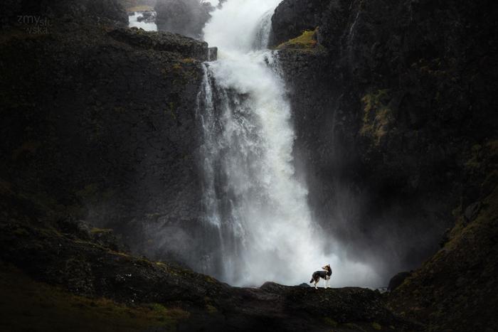 Um cachorro posando em frente a uma cachoeira.