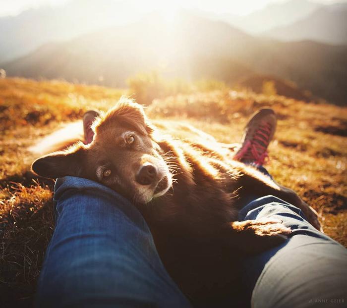 Foto de um cachorro deitado ao lado das pernas de seus donos