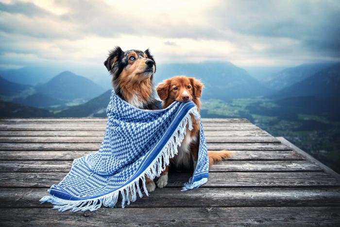 Fotografia fofa de dois cães sob um cobertor ao ar livre